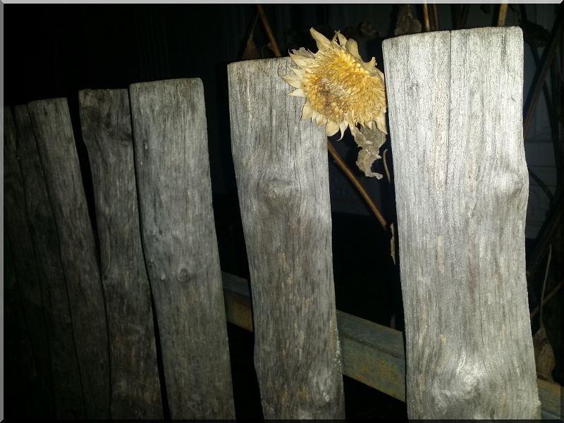 Rusztikus akác kerítés felezett elemekből