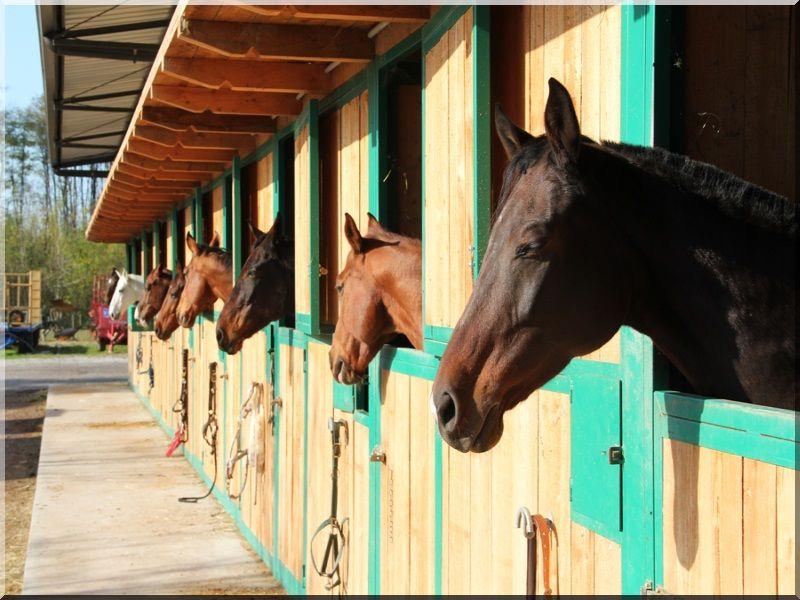 Ló box, 2,7 × 3,3  méteres -