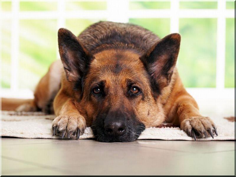 Szigetelt akác kutyaház szélezetlen deszkából, IV- es méret -